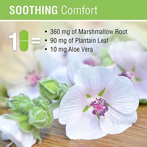 Solaray GI Comfort with Marshmallow Root, Plantain Leaf & Aloe Vera   Healthy Digestion & Gastrointestinal Wellness Support   100 VegCap
