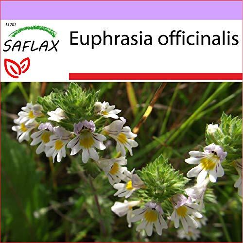 SAFLAX - Heilpflanzen - Augentrost - 200 Samen - Euphrasia officinalis