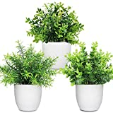LELEE Artificial Potted Plants Mini Fake Plants, 3 Pack Small Plant Potted Faux Rosemary Green Decorative Plant with Plastic White Pot for Home Decor, Indoor, Office, Desk, Shelf, Table Decoration
