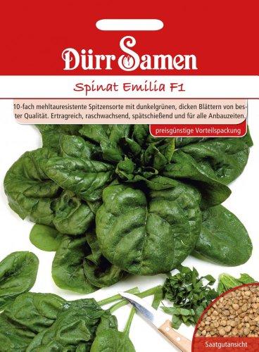 Spinatsamen - Spinat Emilia F1 von Dürr-Samen