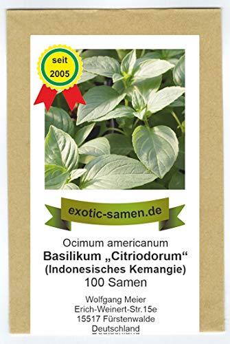 """Ocimum americanum - Basilikum""""Citriodorum"""" - indonesisches Zitronenbasilikum - 300 Samen"""