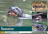 Riesenotter - Flusswölfe im Pantanal (Wandkalender 2020 DIN A3 quer): Riesenotter – erfolgreiche Jäger (Monatskalender, 14 Seiten ) (CALVENDO Tiere) - Michael und Yvonne Herzog