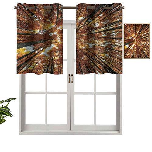 Hiiiman Cenefas de cortina con ojales para ventana, diseño de árboles de haya en temporada de otoño, juego de 2, 137 x 60 cm para ventana de cocina