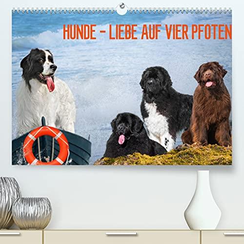 Hunde - Liebe auf vier Pfoten (Premium, hochwertiger DIN A2 Wandkalender 2022, Kunstdruck in Hochglanz)