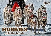 Huskies - Schlittenhunde (Wandkalender 2022 DIN A4 quer): Huskies - freundlich und aufmerksam, mit einem unglaublichen Orientierungssinn. (Monatskalender, 14 Seiten )