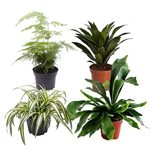 4x Indoor Grünpflanzen