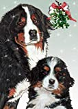 Bernese Mountain Dog Christmas Cards : 10 Holiday Cards with White Envelopes - ADORABLE!
