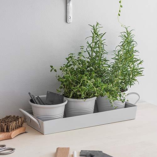 CKB Ltd Set mit 3 Töpfen auf Tablett Metall Vintage Fensterbank Pflanzkasten für die Küche züchten Sie Ihre eigenen Kräuter zum Kochen – traditionell farbig (Kreide)