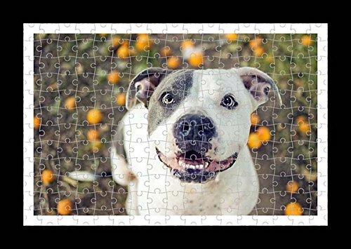Puzzle Style (preensamblado) Impresión de la pared de Pitbull by Lisa Loft
