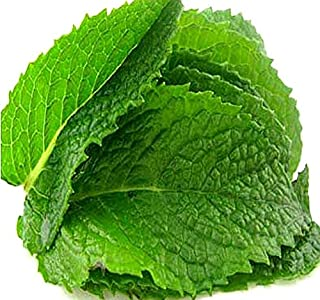 300 x Peppermint Mint Seed - Mentha piperita Mint Seeds - By MySeeds.Co (Single Pack)
