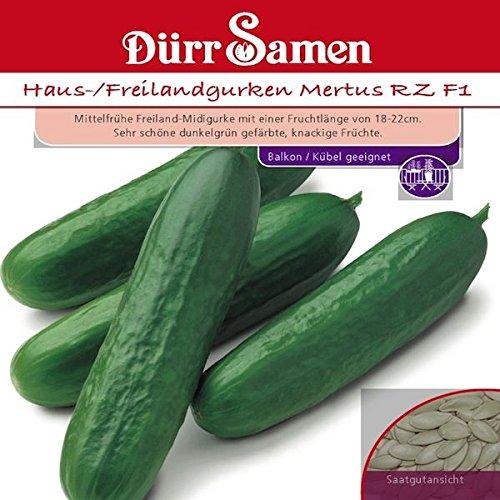 Dürr-Samen - Haus-/Freilandgurken...