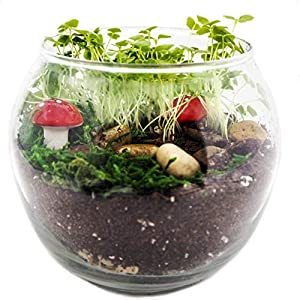 terragreen creations easy grow complete fairy garden kit includes all supplies for making a enchanted and magical fairy garden great indoor garden made in usa