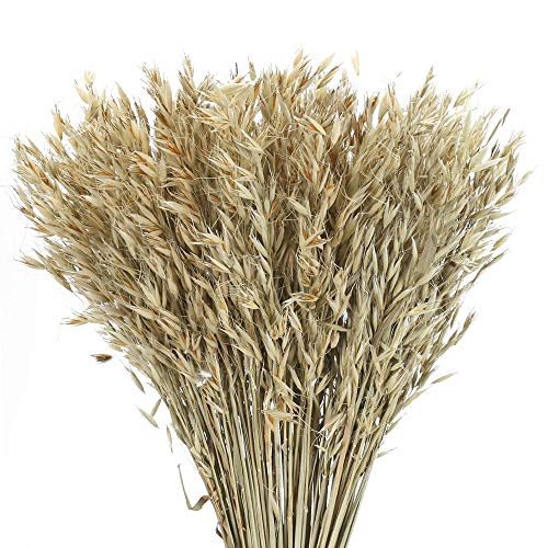 XYXCMOR 100PCS Dried Wheat Tall Natural Dried Plants Phragmites Flowers Arrangements Natural Wheat Dried Grasses Bundle for Wedding Arrangements Home Table Vase Door Wreath Decor