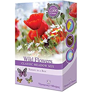 Wild Meadow Flower Garden Plant Seed Grow Your Own Cornflower, Grasses & Buttercups 1 x 15g Mixed Pack by Thompson & Morgan