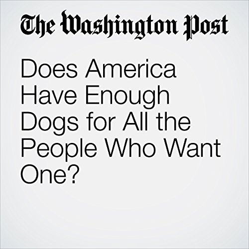 Does America Have Enough Dogs for All the People Who Want One? copertina