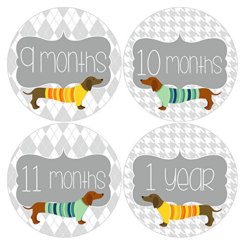 Gift Set of 12 Round Keepsake Photography Monthly Baby Stickers with Dachshund Doxie Puppies MOSB183