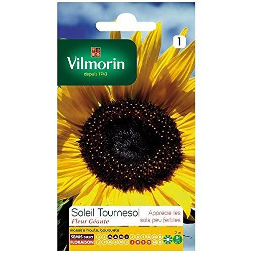 Vilmorin - Sachet graines Soleil tournesol fleur géante