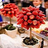 TENGGO Egrow 100 Teile/Paket Erdbeerbaum Samen Seltene...