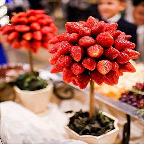 DaDago 100 Teile/Paket Erdbeerbaum Samen Seltene Frucht Erdbeer Bonsai Samen Garten DIY Pflanzen