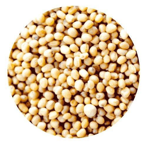 神戸アールティー イエローマスタード シード 100g Yellow Mustard Seed イエローマスタード マスタード 業務用