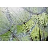 Vlies Fototapete 300x210 cm PREMIUM PLUS Wand Foto Tapete Wand Bild Vliestapete - Blumen Tapete Pusteblume Blüte Blume Geflecht Netz Streifen grün - no. 829