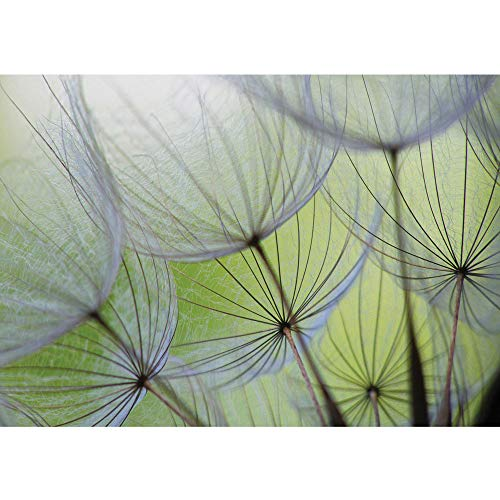Vlies Fototapete 400x280 cm PREMIUM PLUS Wand Foto Tapete Wand Bild Vliestapete - Blumen Tapete Pusteblume Blüte Blume Geflecht Netz Streifen grün - no. 829