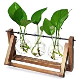 Ivolador Desktop Glass Plants Bulb Terrarium with Retro Solid Wooden Stand and Metal Swivel Holder...