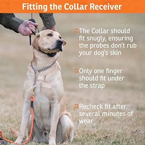 SportDOG 3 Mode Waterproof Training Collar for Dogs