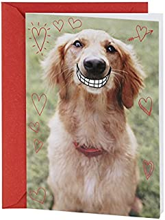 Hallmark Shoebox Funny Valentine's Day Card (Smiling Dog)