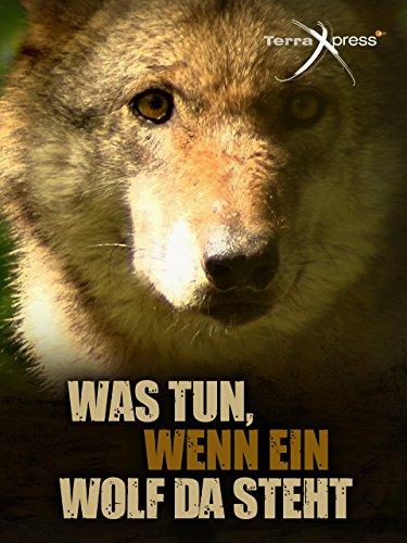 Was tun, wenn ein Wolf da steht