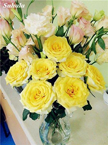 Vente! 100 Pcs Eustoma Graines vivaces plantes à fleurs Balcon fleurs en pot Graines Bonsai intérieur Graines de fleurs pour jardin 20