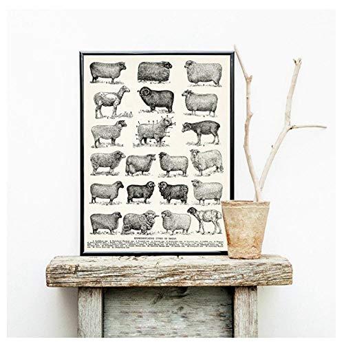 MULMF Leinwand Gedruckt Wohnkultur Malerei Rassen Von Schafen Vintage Poster Wandkunst Modulare Moderne Bilder Für Wohnzimmer-60X80 cm Kein Rahmen