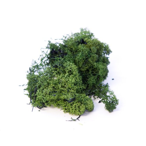 Finland Moss Dark Green 500g bag Smithers Oasis