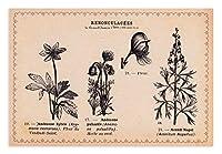 グランシュマン ポストカード ボタニカル (NO.15 キンポウゲ科の植物) 20069002G
