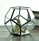 Contenedor de cristal transparente geométrico pentágono Dodecaedro para helechos musgo suculentas plantas de aire titular miniatura maceta de cristal