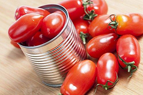 38mg BIO Martino tomate Roma Seeds ~ Rare italienne Heirloom indéterminés