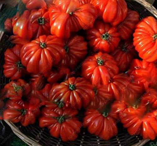 Elitely 100 piezas/bolsa Heirloom monstruo gigante de tomate bonsai, verduras muy bonsái para el hogar y el jardín, maceta fácil de cultivar: P