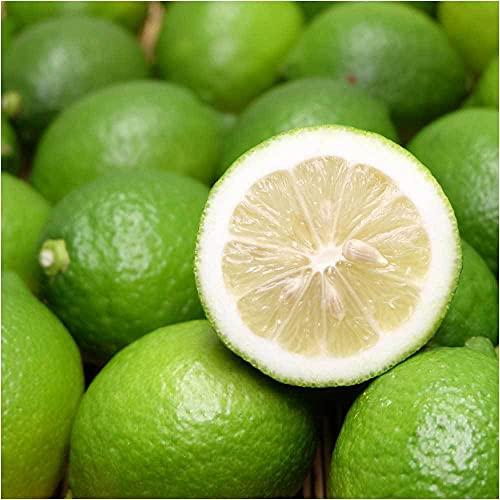 レモン(青) A品 10kg 県特別栽培 (熊本県 オレンジヒルズ) ふるさと21