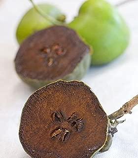 Diospyros Digyna BLACK SAPOTE Chocolate Pudding Fruit *4 Fresh Seeds * Very Rare