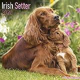Irish Setter Calendar 2020,  D...