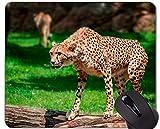 Yanteng Alfombrilla de ratón Antideslizante para Juegos de Goma, Zumo de Goma Antideslizante Zoo Leopard Salvaje con Base de Goma