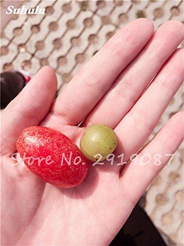 Nouveaux 2017 Fruit Lait de chèvre Graines Tropical Noir bio Brin Arbre de lait de chèvre Bonsai Fruit, Grand jardin Plantes vivaces 100 Pcs 9