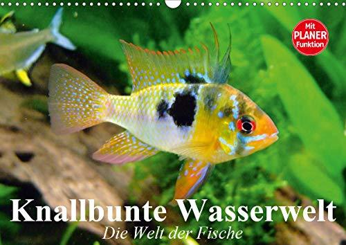Knallbunte Wasserwelt. Die Welt der Fische (Wandkalender 2021 DIN A3 quer)