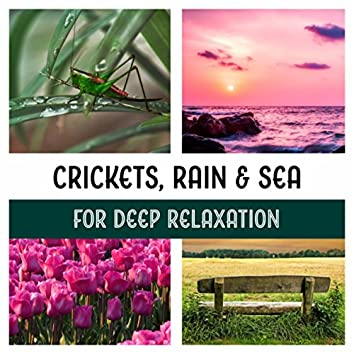 Crickets, Rain & Sea for Deep Relaxation - Calm Night Time, Yoga Nidra for Dream Meditation, Journey for Woodland, Lucid Dreaming Preparation