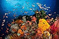 ユニークなジグソーパズル500ピース海底魚大パズルゲーム男の子のための教育学習おもちゃ女の子ギフト家の装飾38 * 52cm