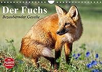 Der Fuchs. Bezaubernder Geselle (Wandkalender 2022 DIN A4 quer): Froehliche Rotfuechse beim vergnuegten Spiel mit Hunden (Geburtstagskalender, 14 Seiten )