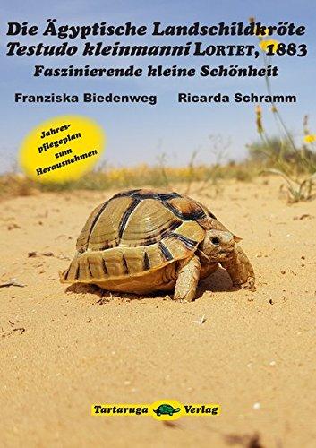 Die Ägyptische Landschildkröte Testudo kleinmanni Lortet, 1883: Faszinierende kleine Schönheit