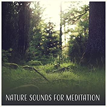 Nature Sounds for Meditation – Relaxing Sounds for Meditation and Yoga, Soothing Sleep Sounds, Ambient Sounds of Nature, Stress Reduction, Healing Nature