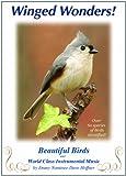 Winged Wonders! Beautiful Birds ...