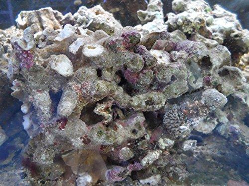 Aqua Inspiration Frisches Meeresgestein